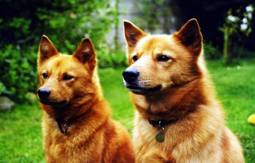 dos perros sentados en la hierba