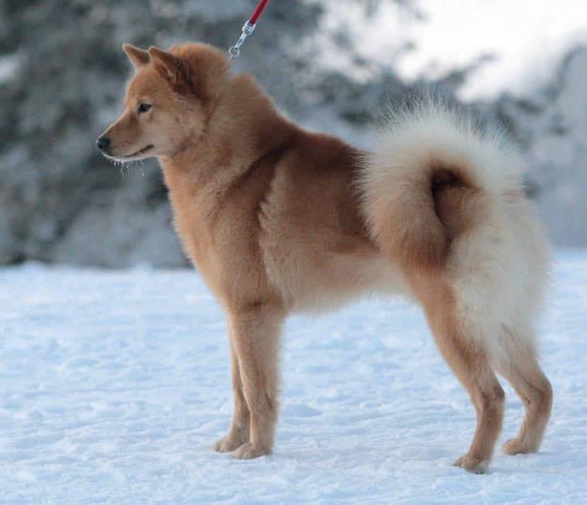 perro de color marron en la nieve