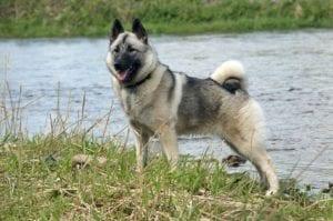perro de gran tamano al lado de un rio
