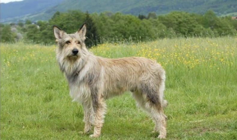 precioso perro con las orejas en alerta