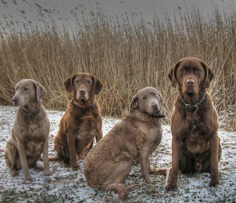 4 perros sentados y mirando a la camara