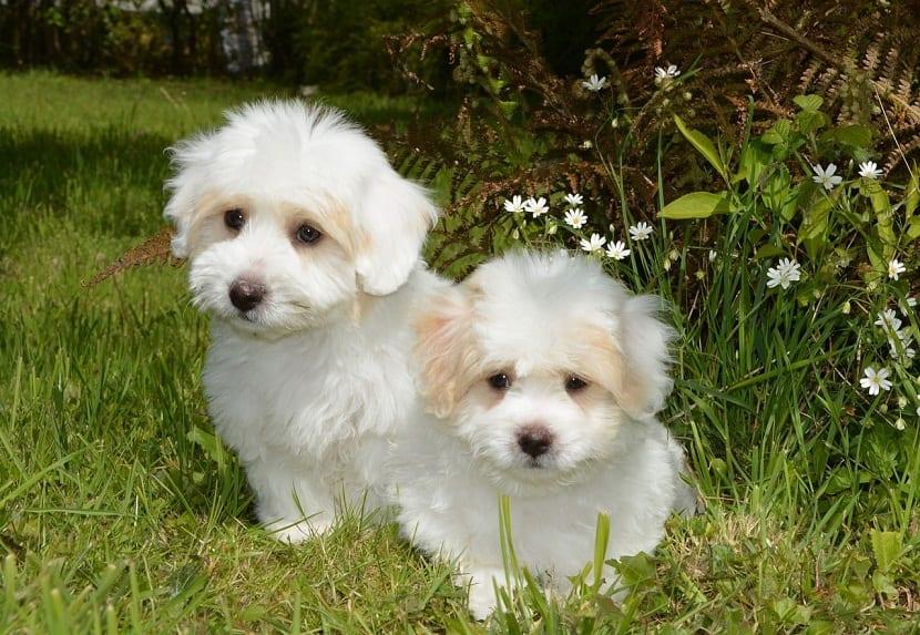 dos cachorros de perro con mirada triste