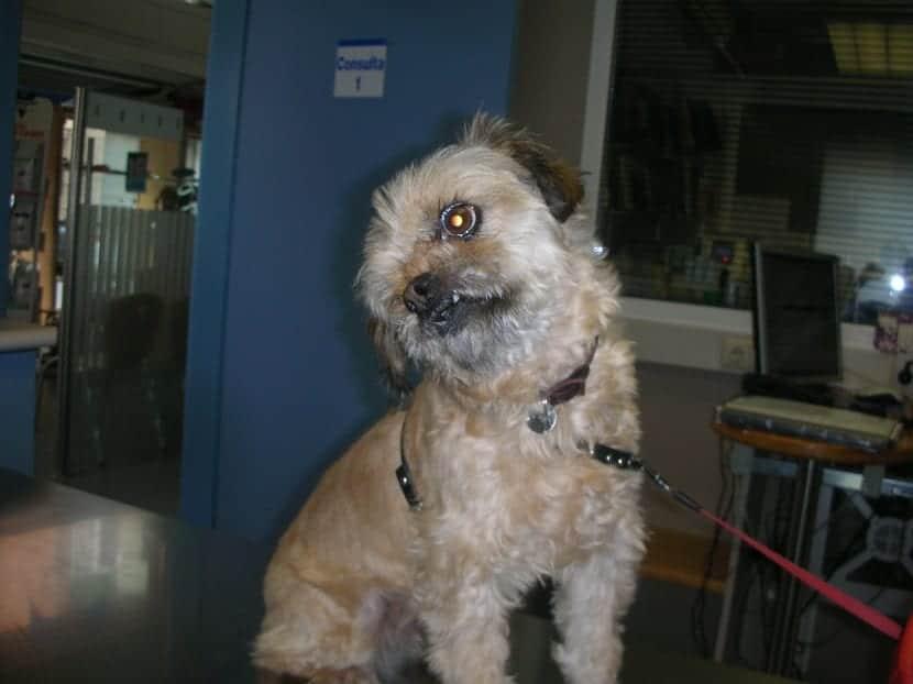 perro comiendo un trozo de hueso