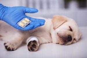 persona ofreciendo medicamentos a un cachorro que está en el suelo