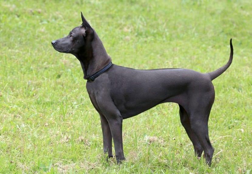 https://www.mundoperros.es/tratar-la-displasia-cadera-perro/