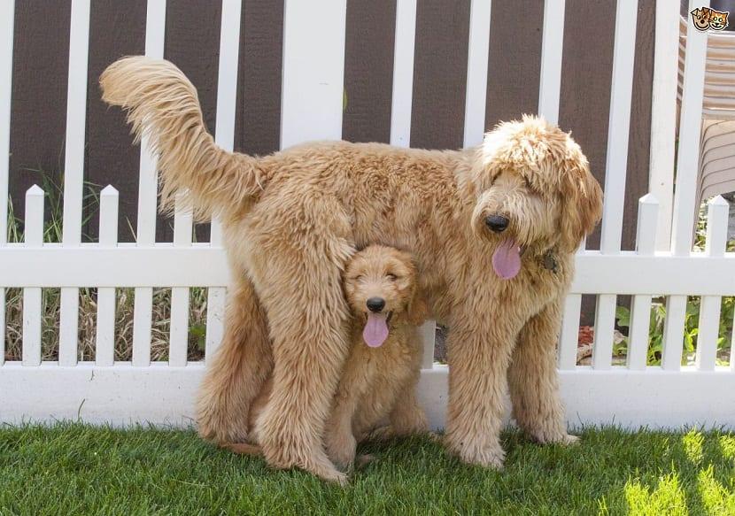 cachorro de perro debajo de su madre