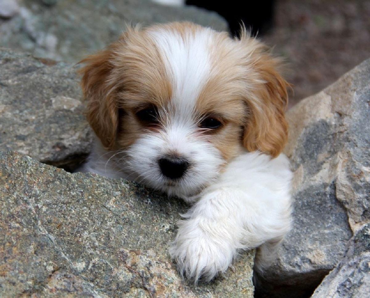 cachorro de color marron y blanco encima de unas piedras