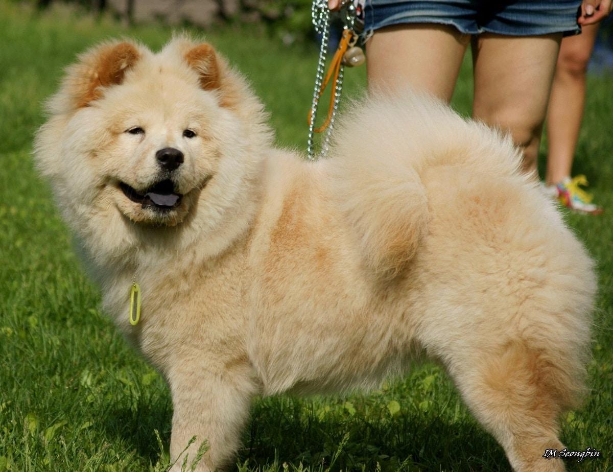 perro con lengua morada