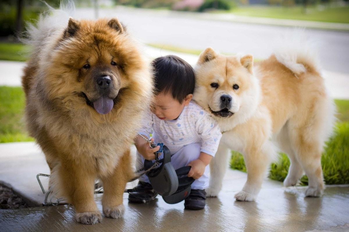 raza de perro con lengua morada