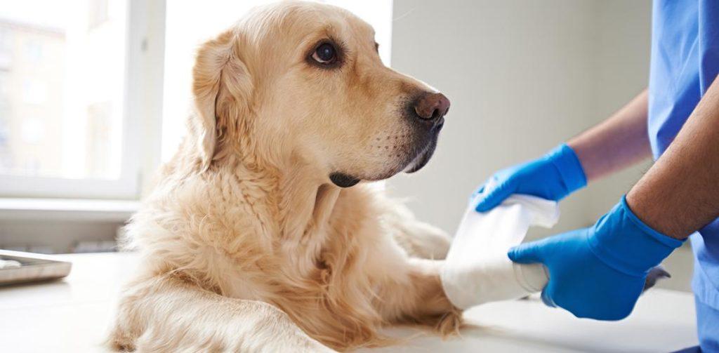 Primeros auxilios a perro