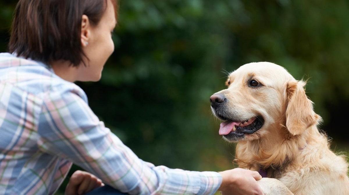 perro dando la pata a su duena