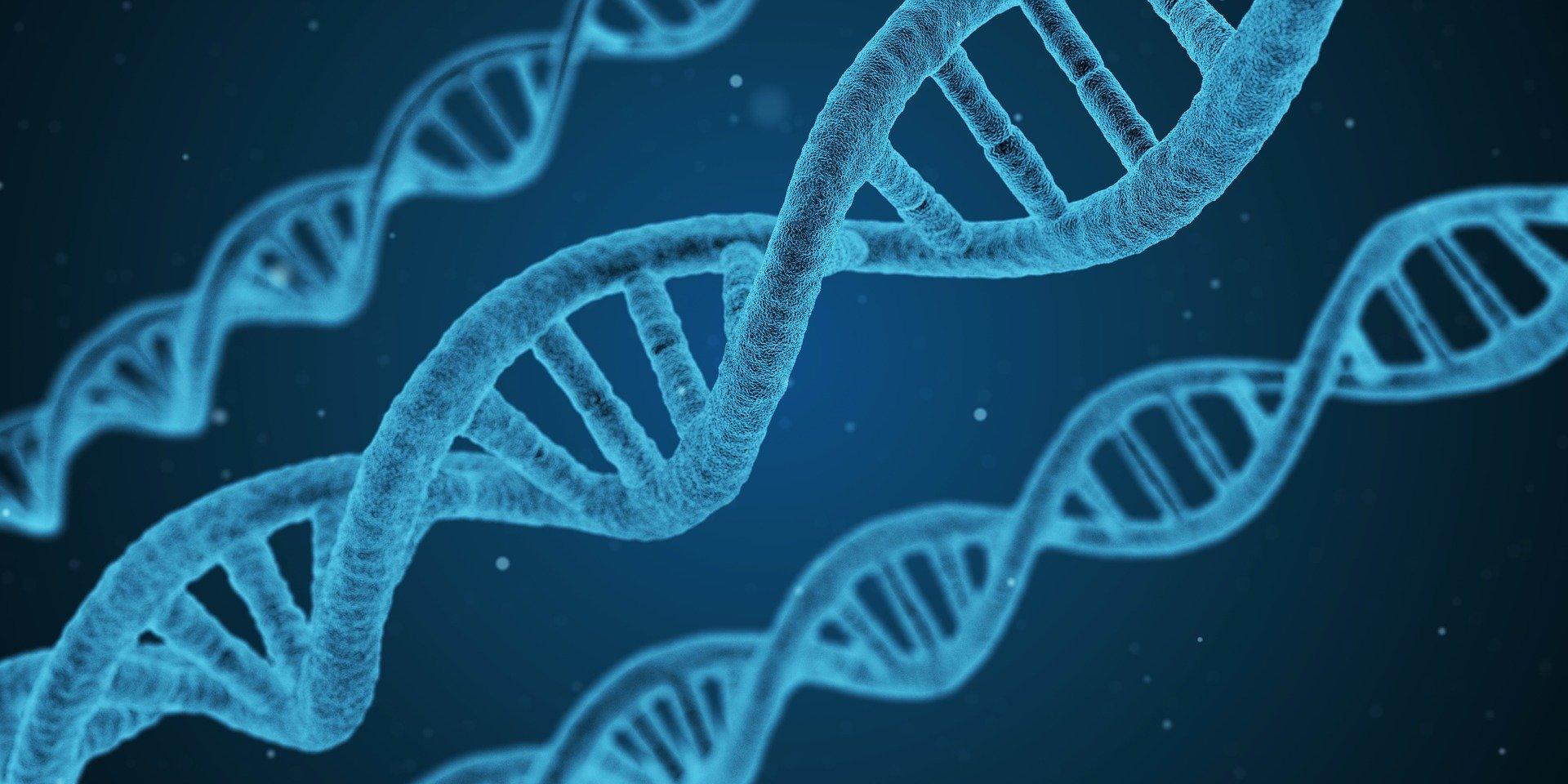 El ADN es la señal de identidad de los seres vivos