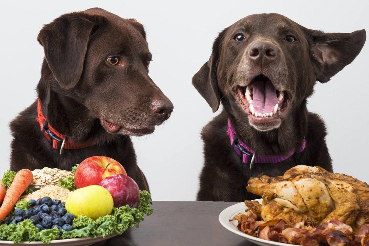 dos perros con dos platos de comida diferentes
