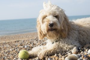 perro de pelo blanco en la playa
