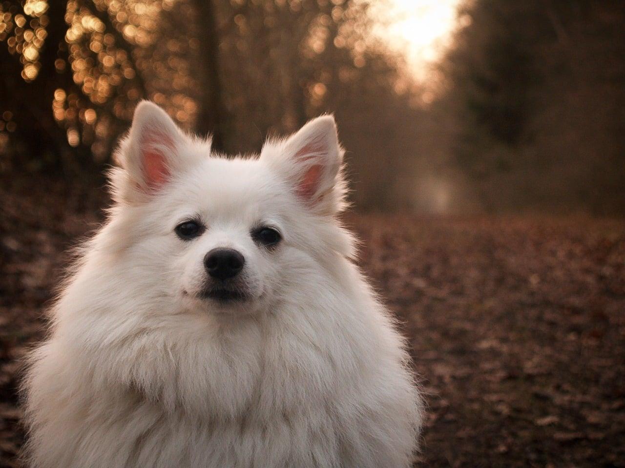 imagen de perro con un atardecer detras