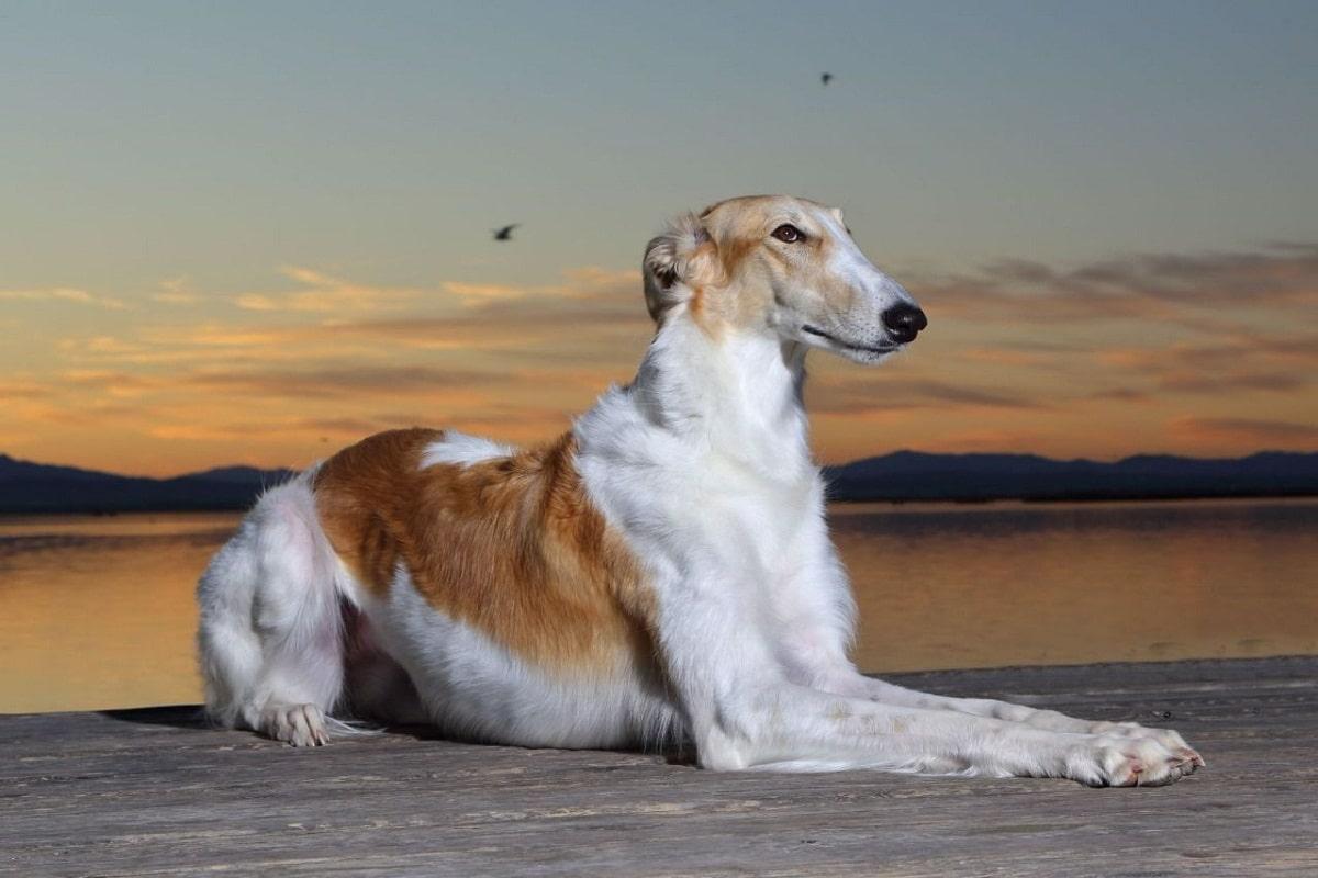 perro sentado en puesta de sol