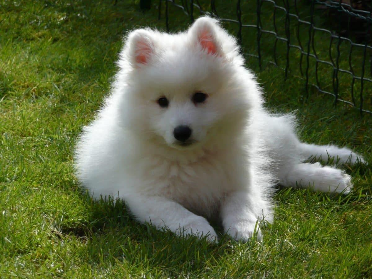 perro de color blanco sentado en la hierva