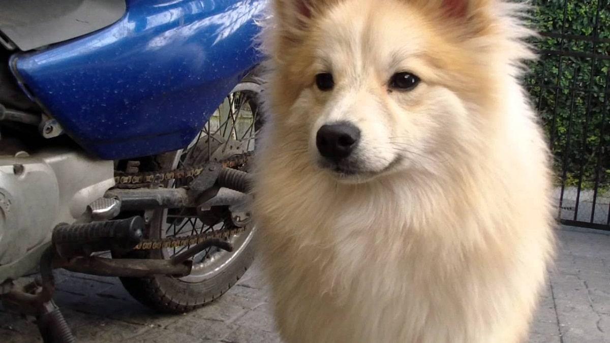 perro de color blanco junto a una pelota