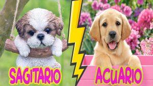 ¿Cuál es el signo zodiacal de tu perro o gato?