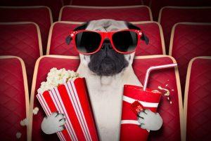 perro con gafas y palomitas sentado para ver una pelicula