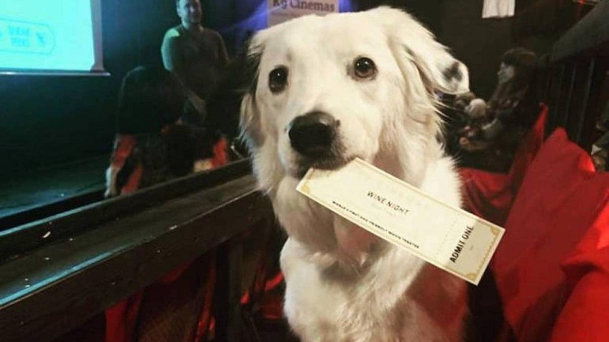 perro con una entrada de cine en la boca dispuesto a disfrutar de la peli