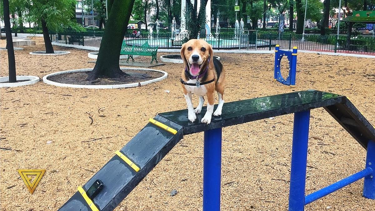 perro sonriente en un parque