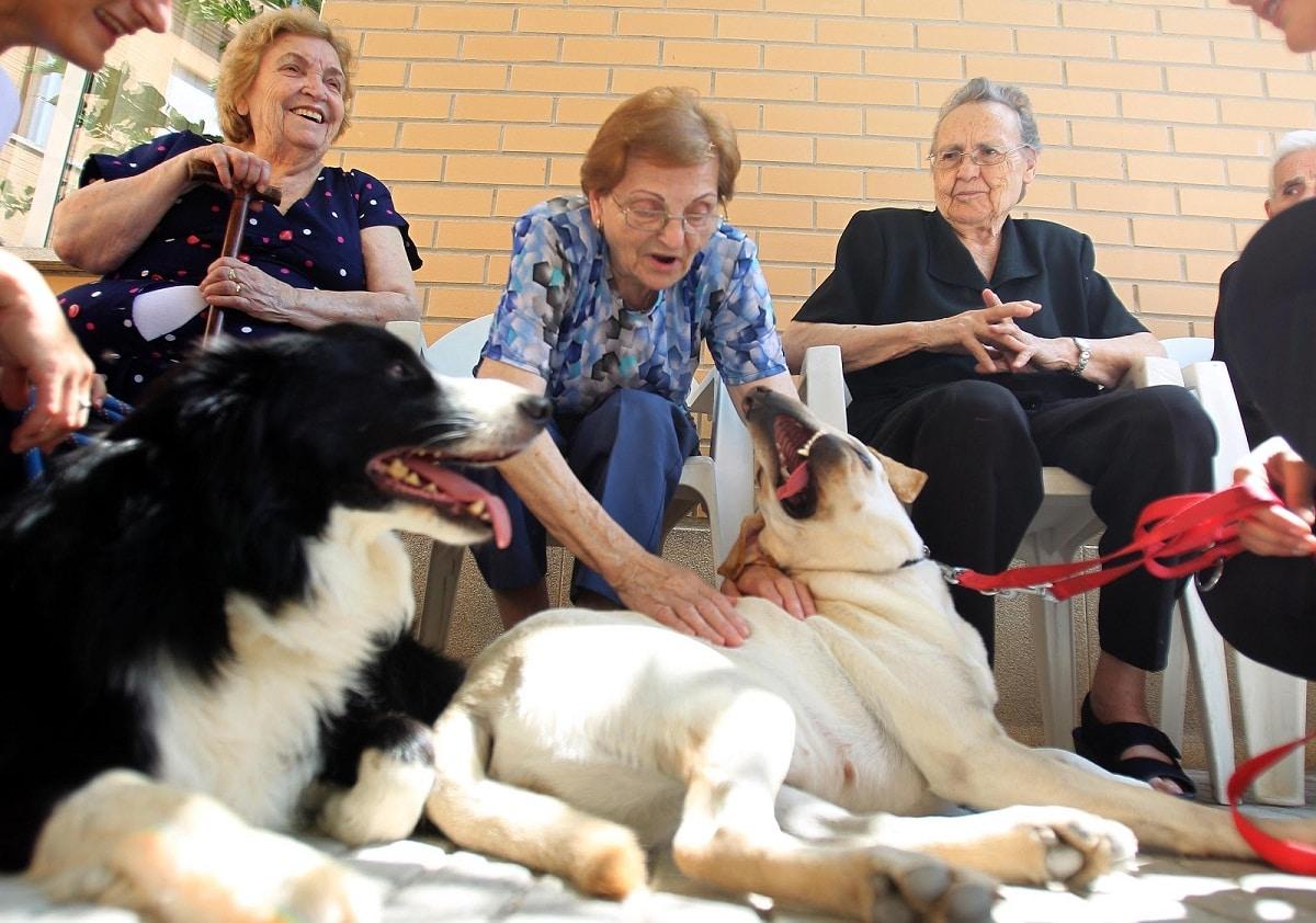 personas mayores interactuando con perros