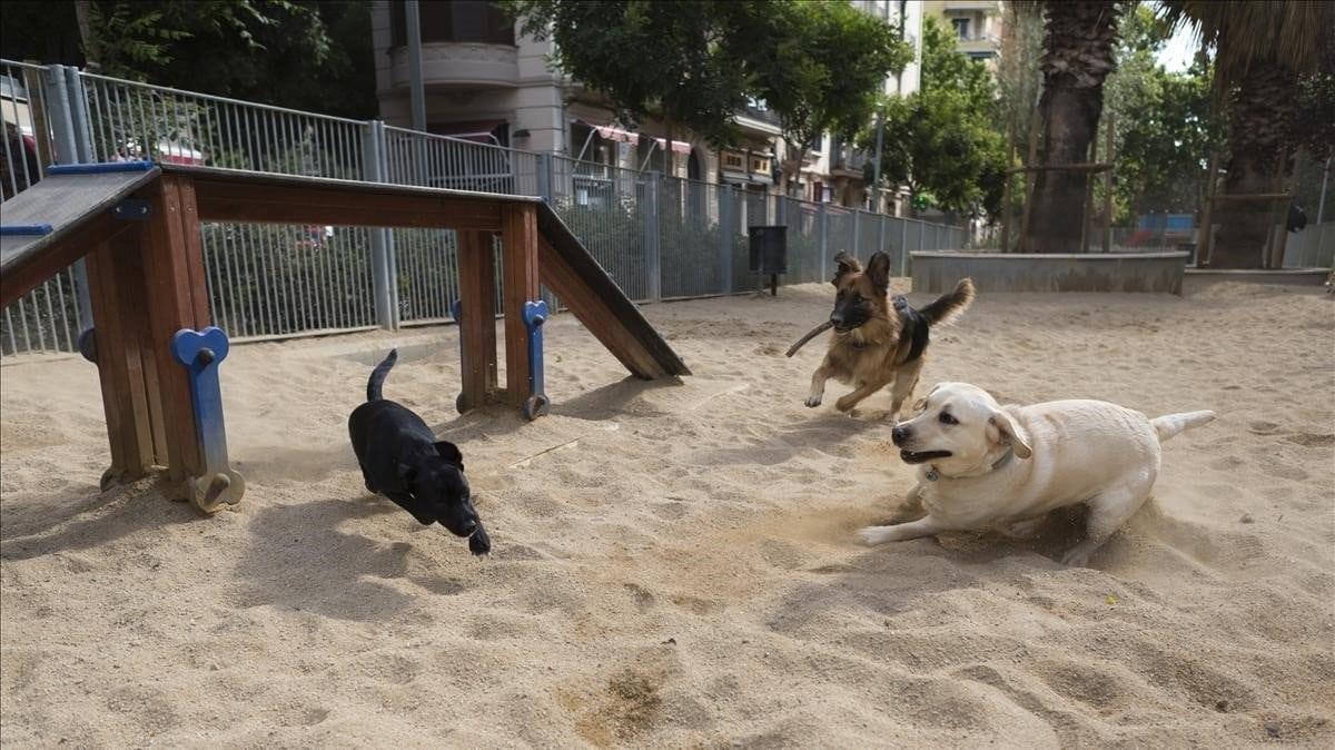 tres perros jugando dentro de un parque para perros