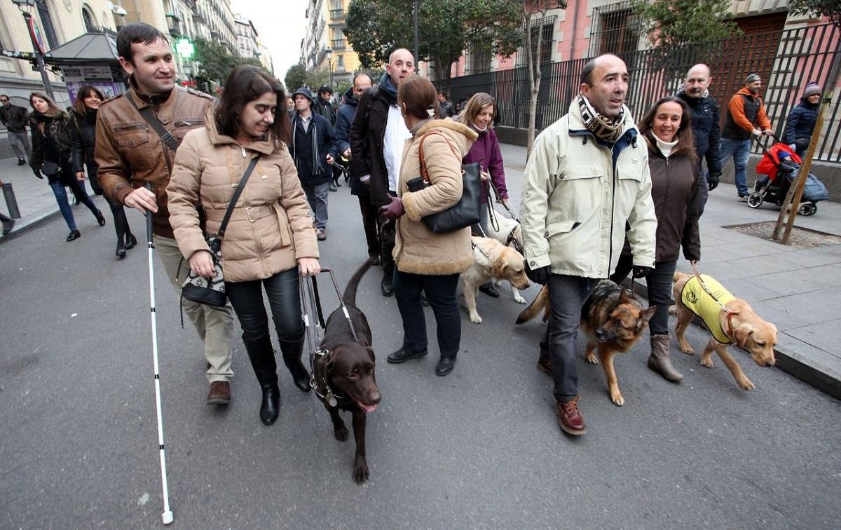 grupo de gente caminando por la calle junto a sus perros