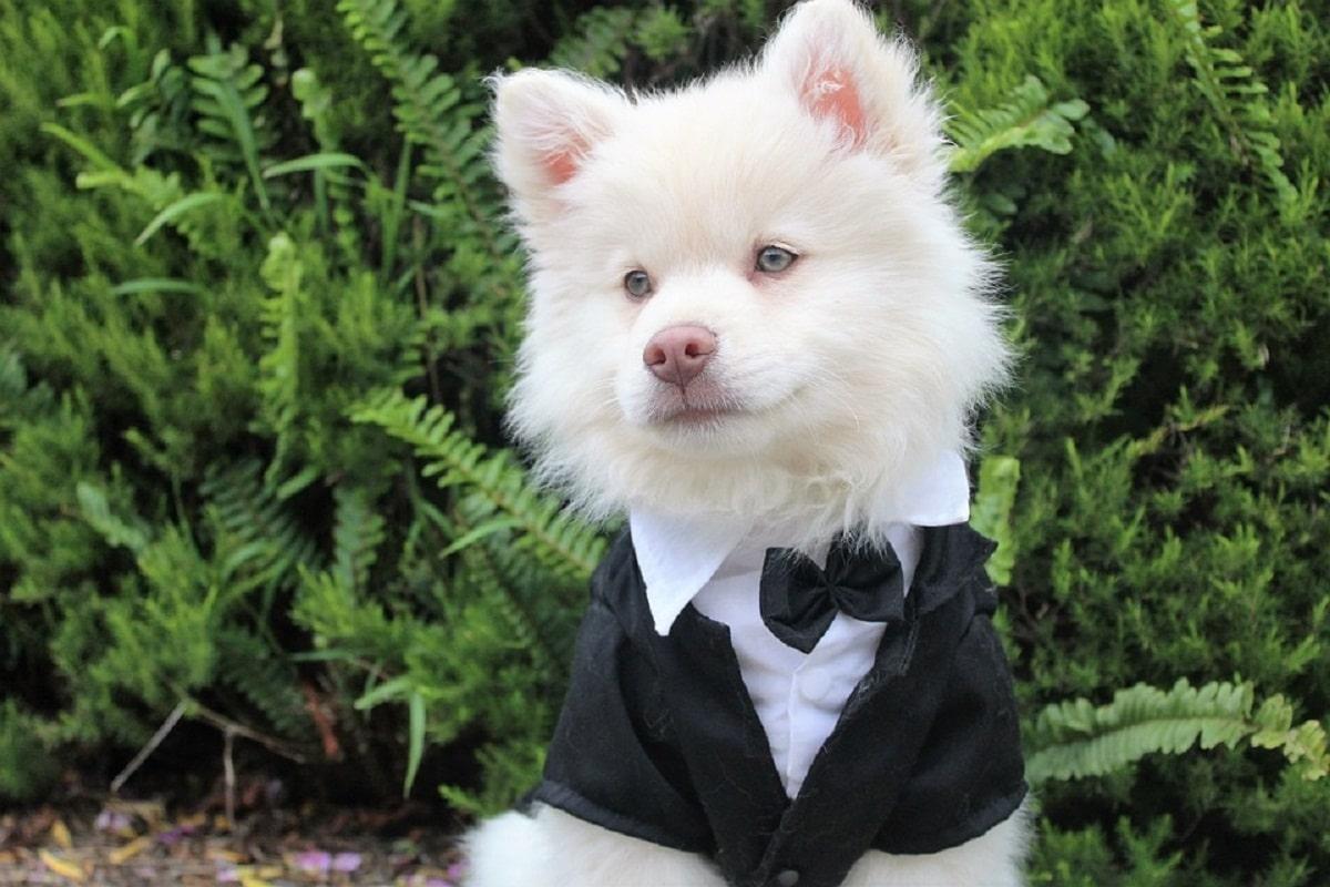 perro vestido con traje para ña boda de sus duenos