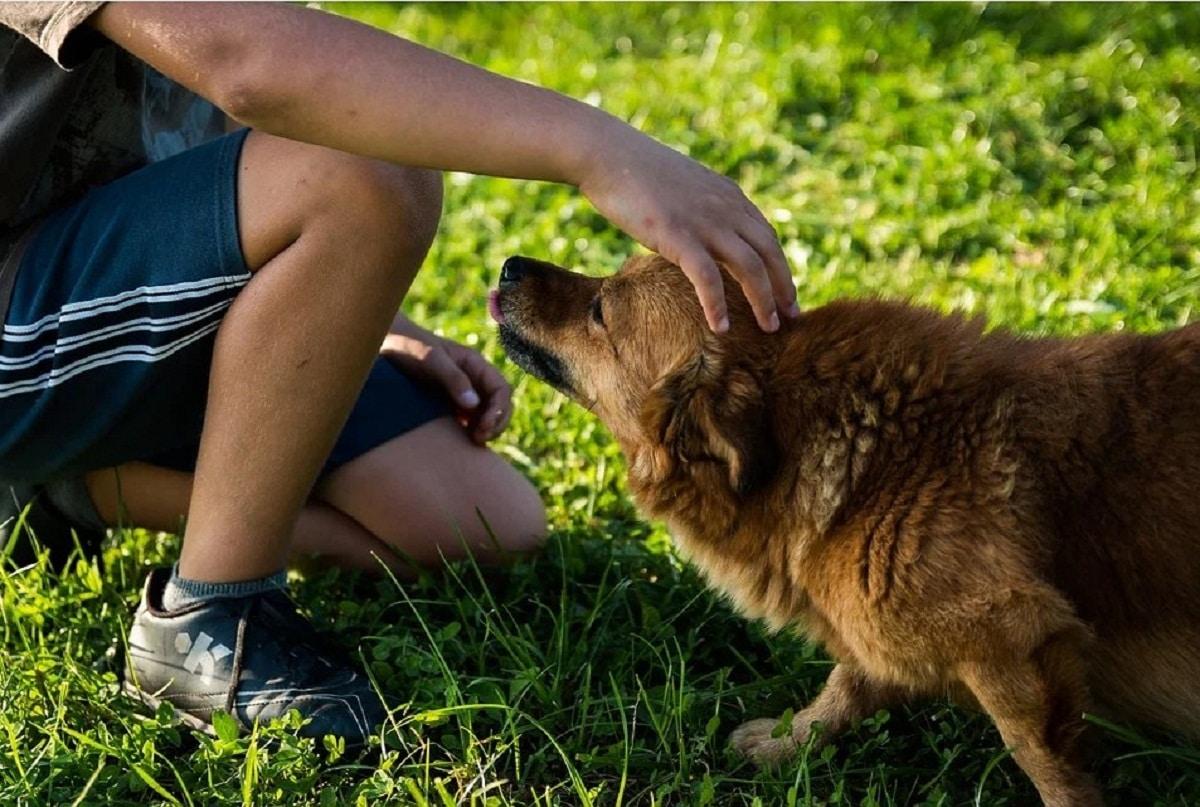 nino pequeno tocando cabeza a perro tocando un perro