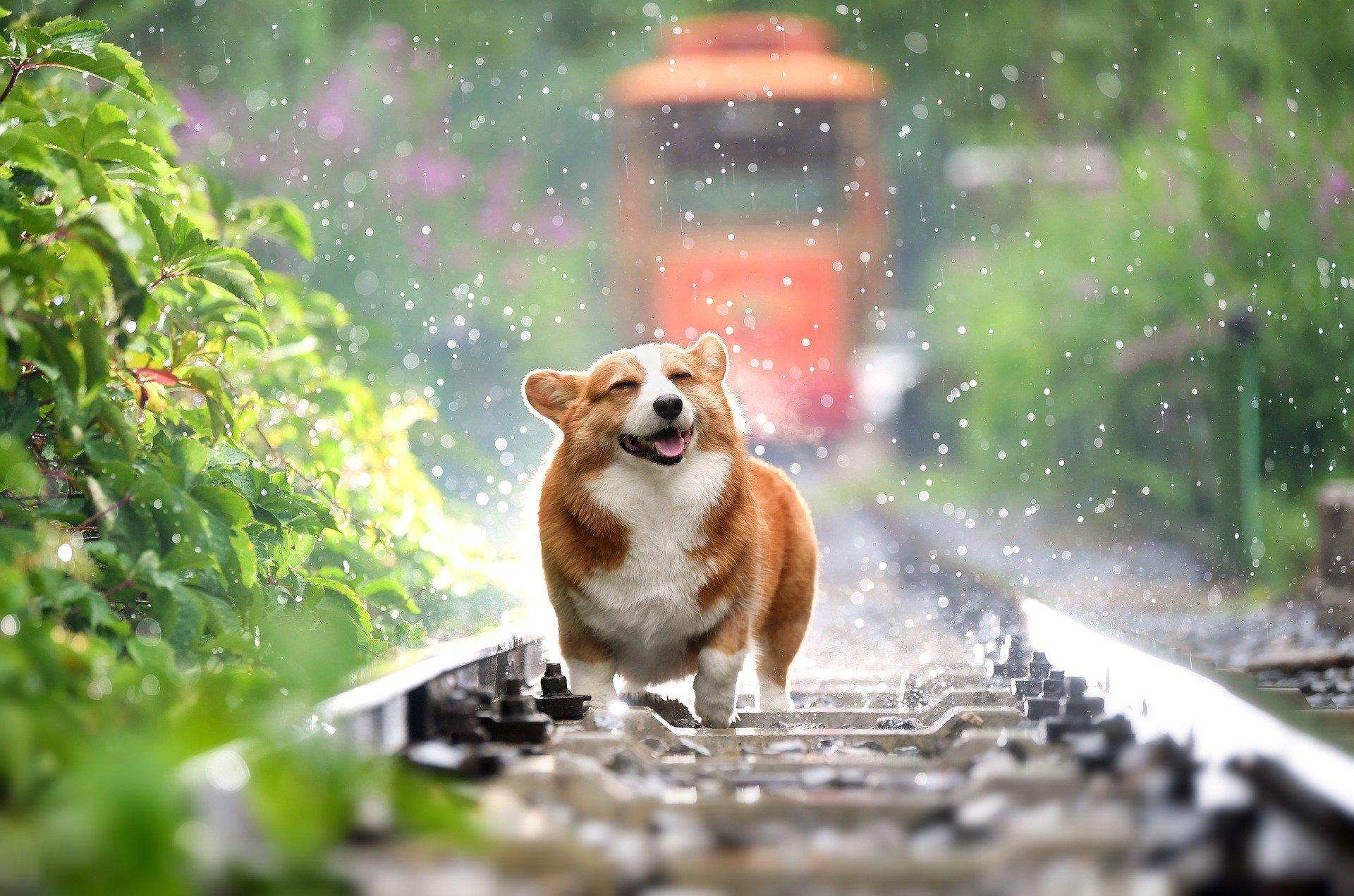 Las causas de la barriga hinchada en perros son varias