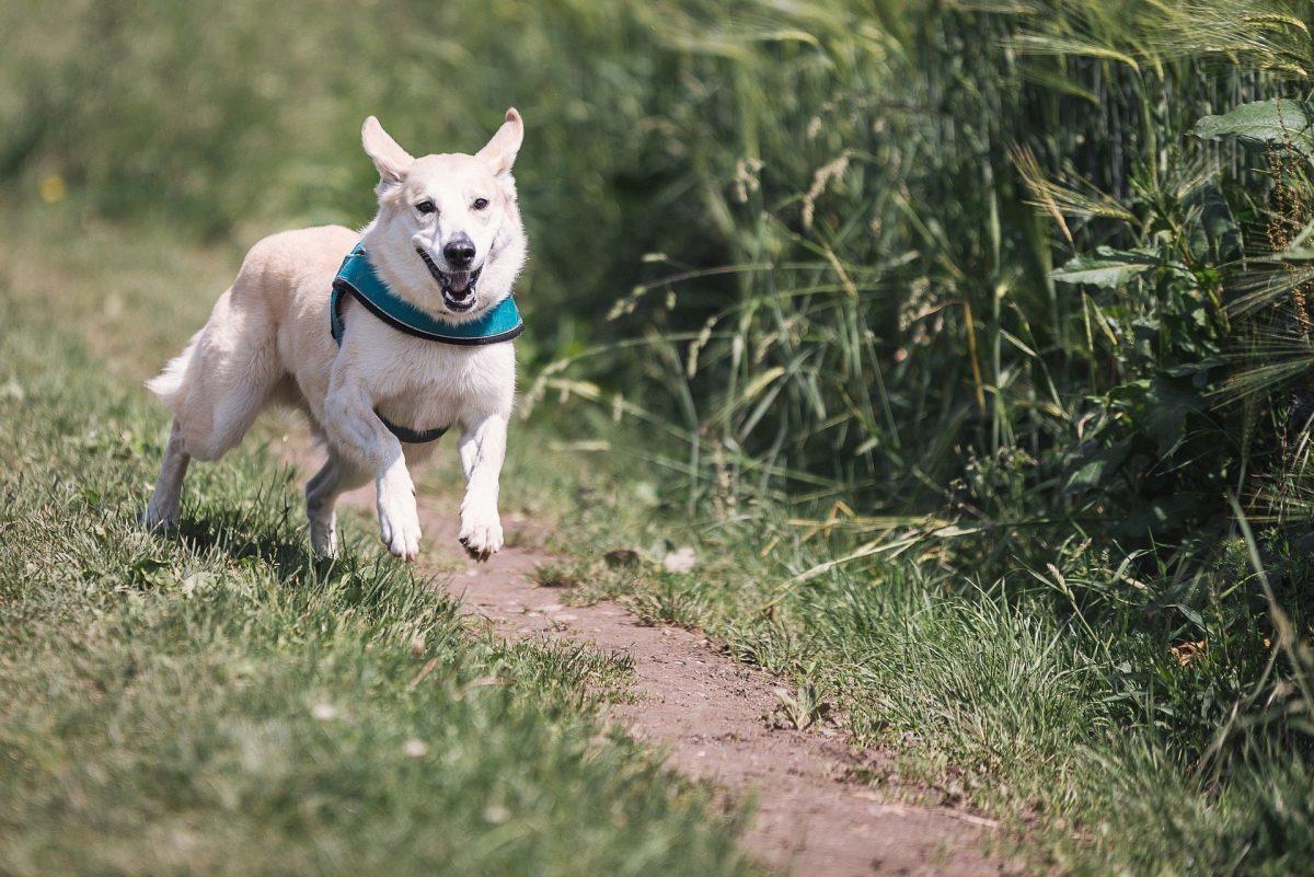 Si tu perro anda en círculos, llévalo al veterinario