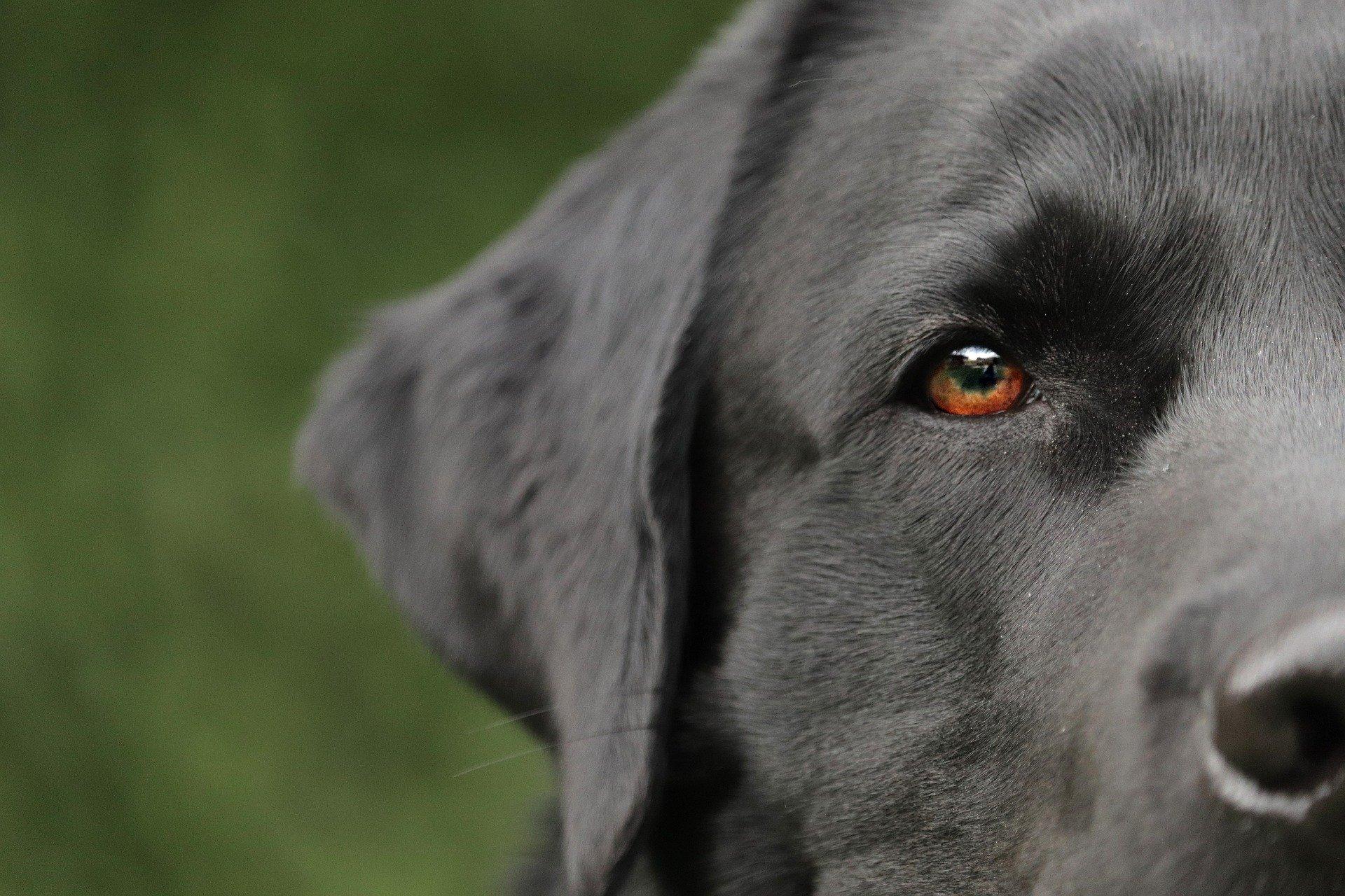 Los problemas de oídos en perros no son comunes