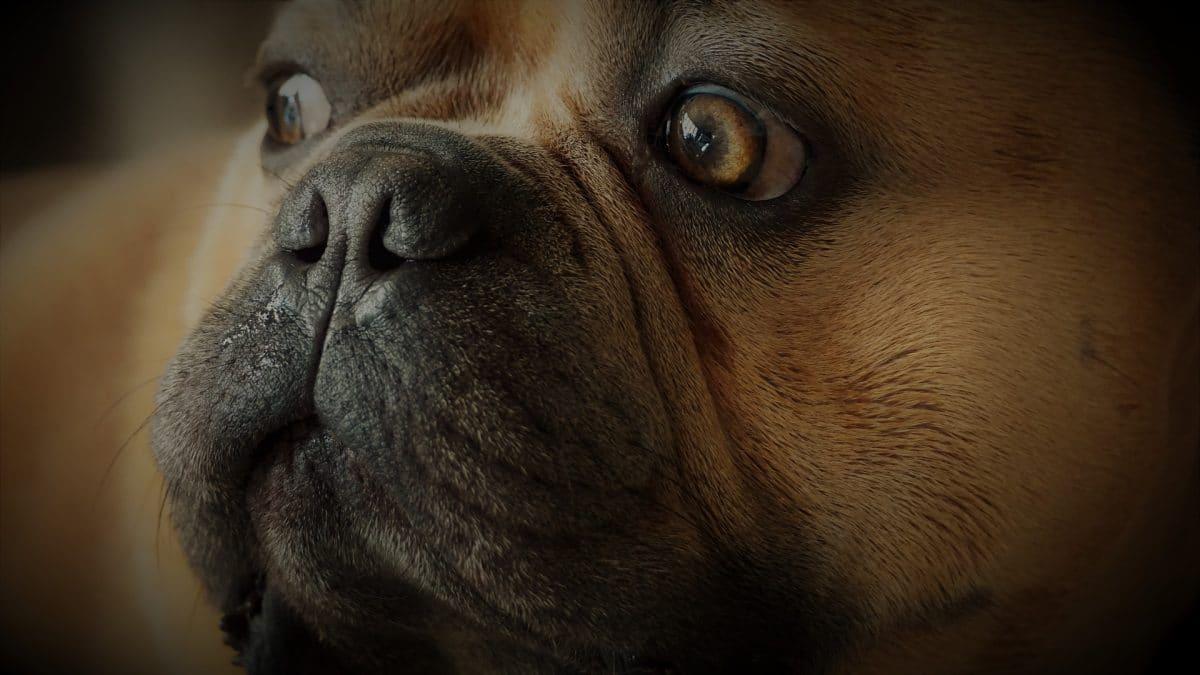 Los bigotes de algunos perros son especiales
