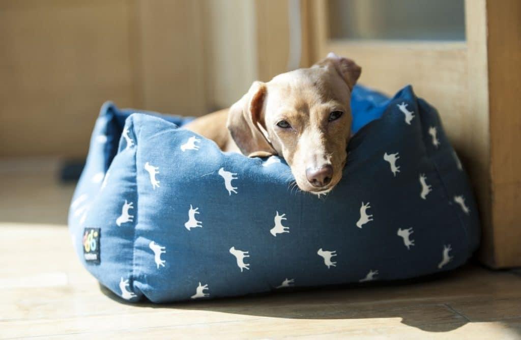 Cama para perros azul con estampado