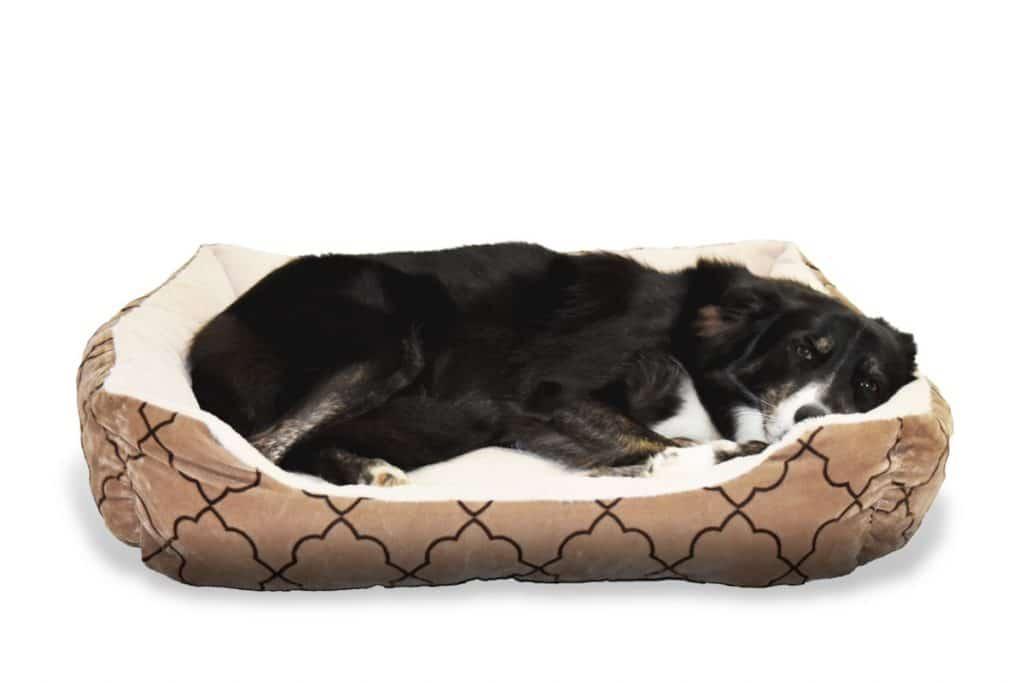 Perro durmiendo plácidamente en una cama grande para perros