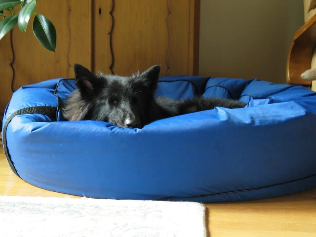Cama grande para perros de plástico azul