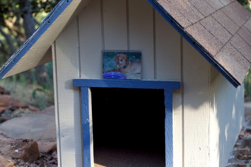 Caseta de perro azul