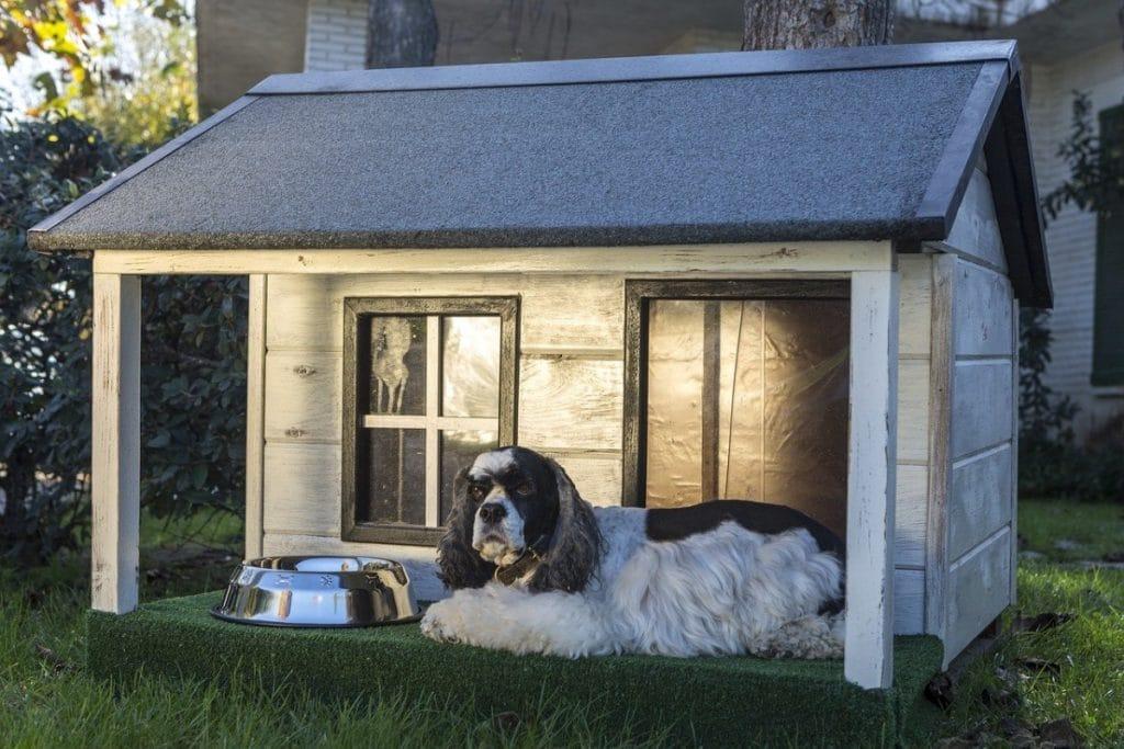 Caseta de madera con perro delante
