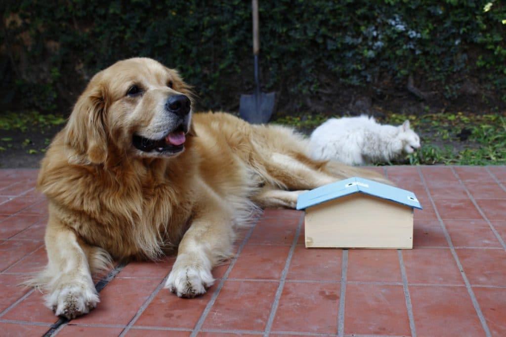 Una casa mini y un perro muy grande
