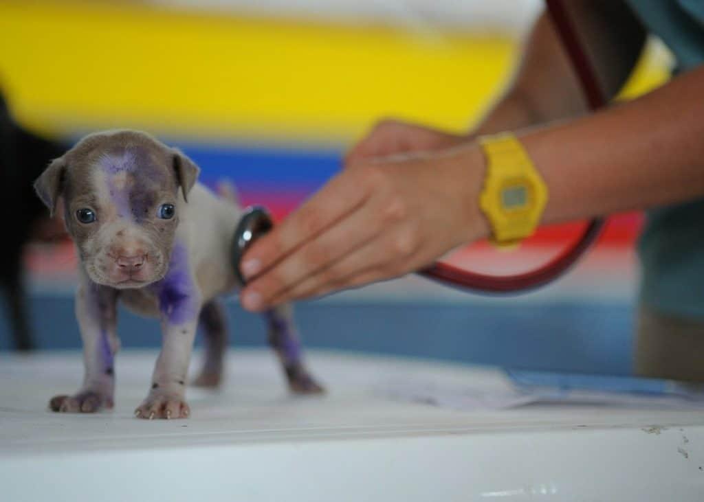 Perrito en el veterinario