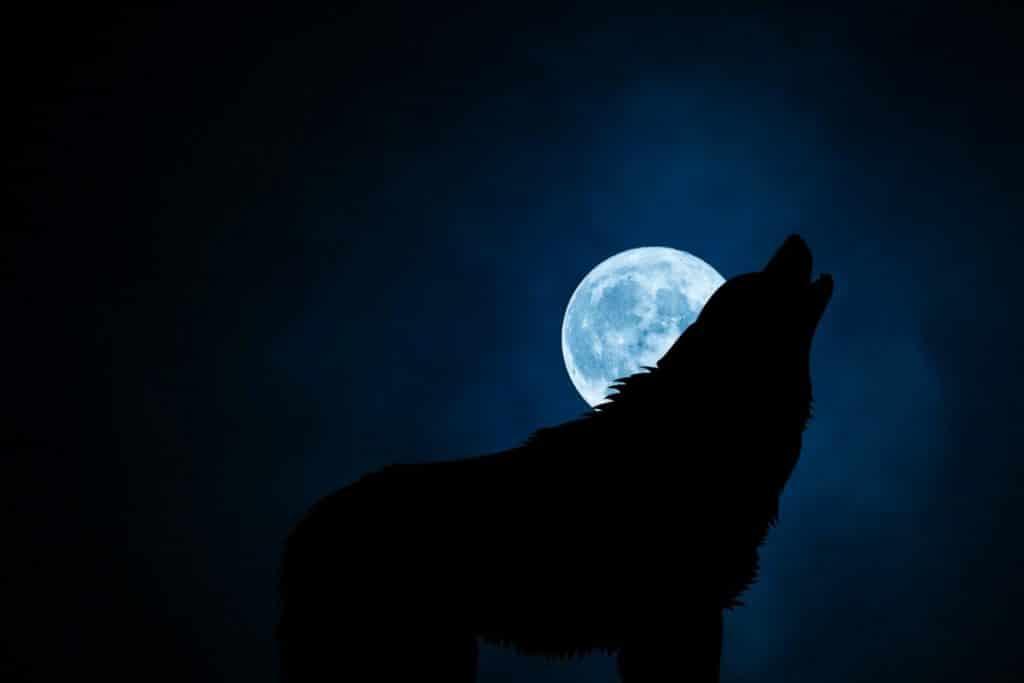 Perro aullando de noche