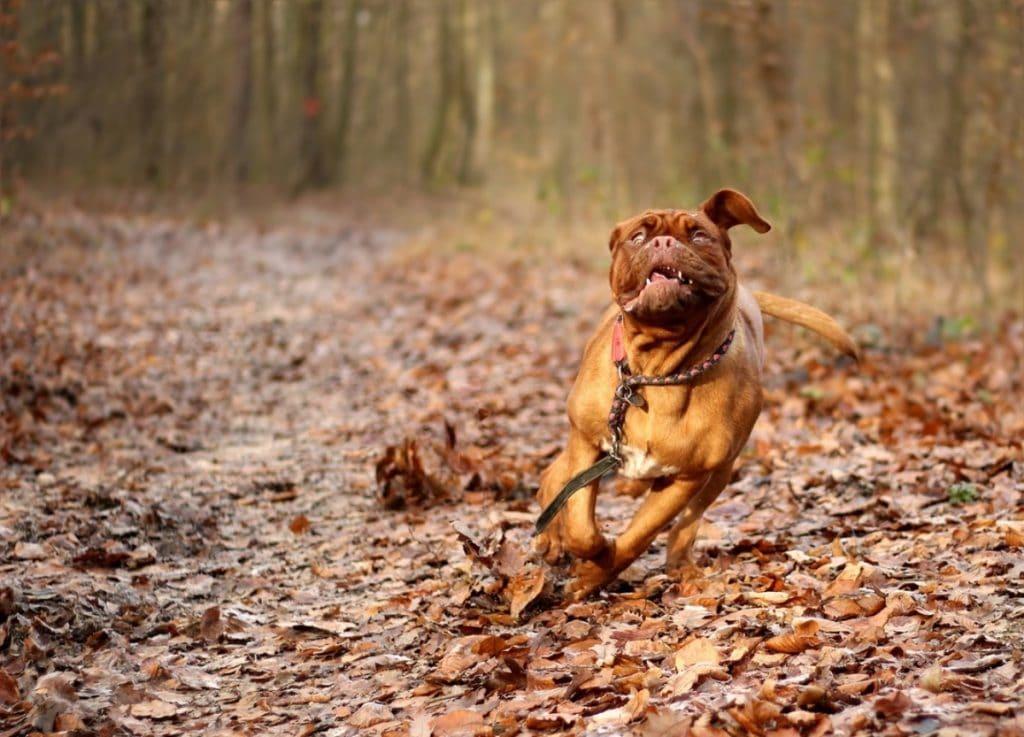 Perro corriendo en un bosque