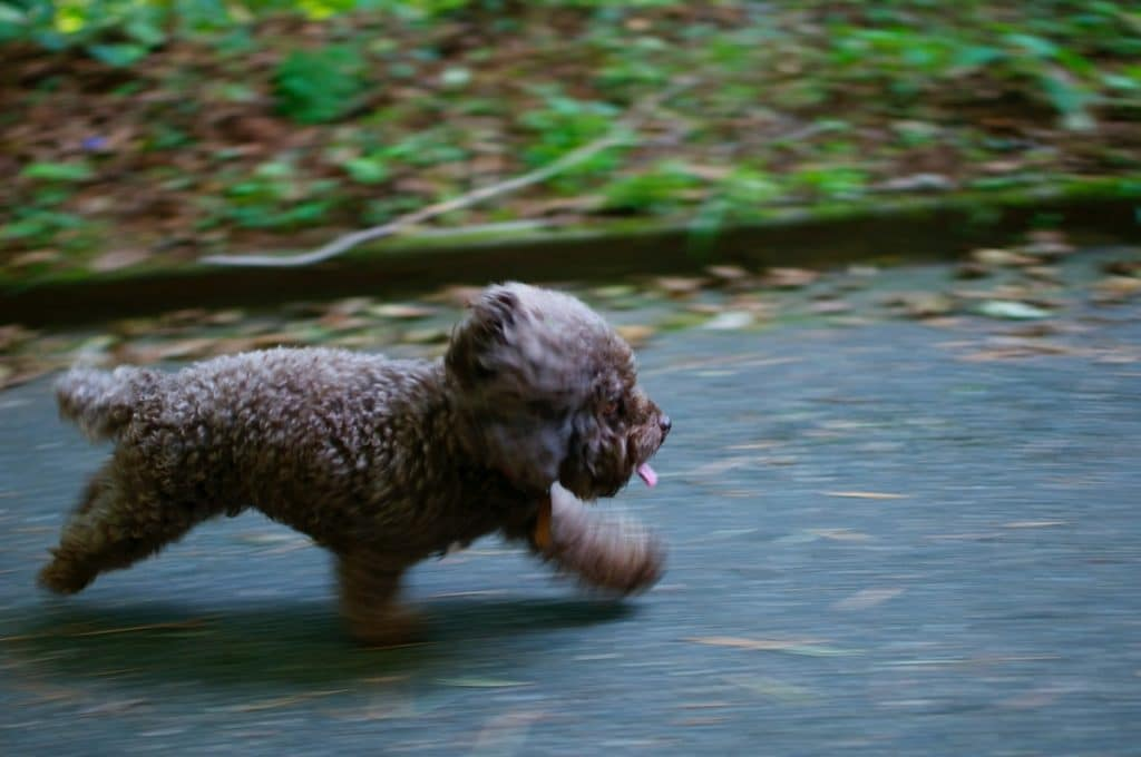 Perro huyendo por la calle
