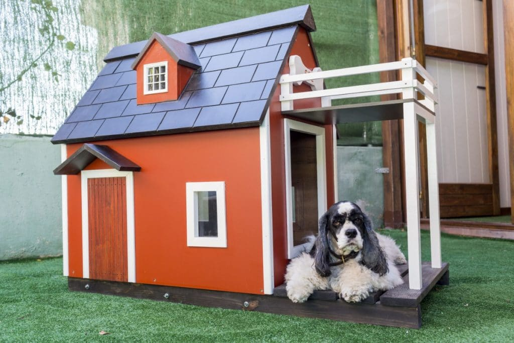 Caseta de madera roja con perro