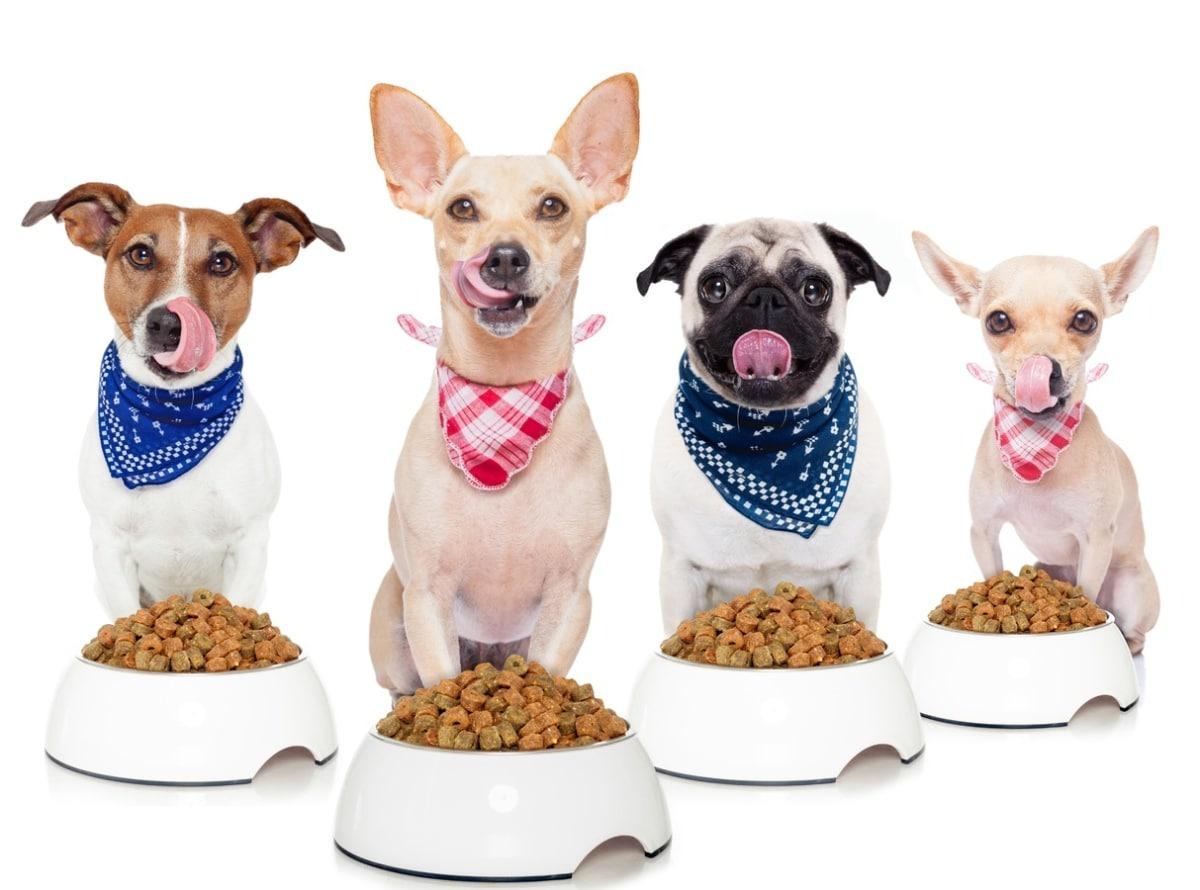 Unos perros se disponen a comer.