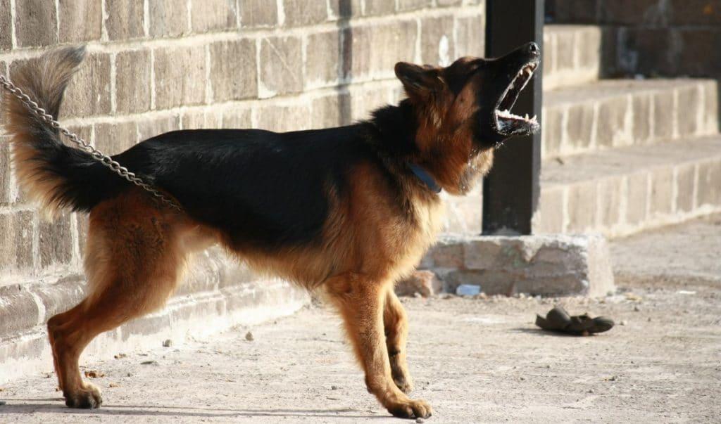 Perro atado
