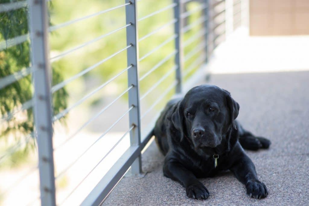 Perro negro en interior de casa