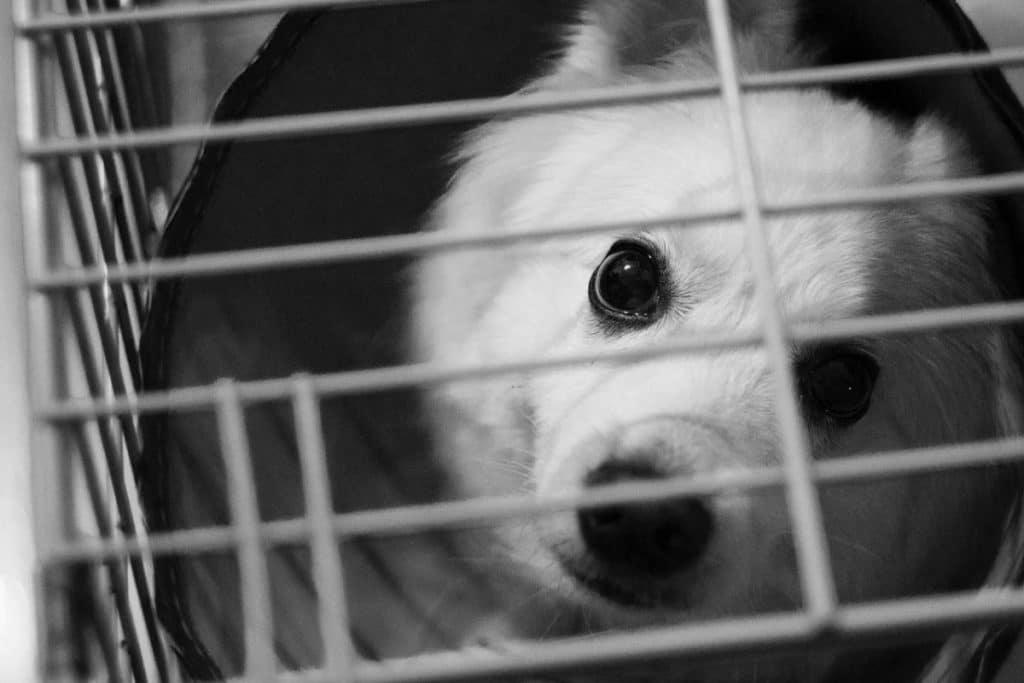Perro encerrado